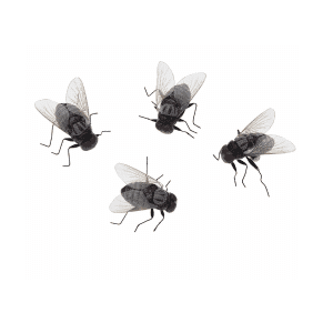 Vliegen magneetjes